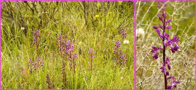 Chypre 2007 : mise à jour 2012 avec des photos Lax10