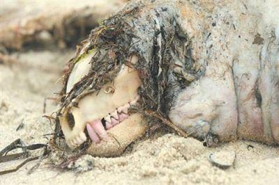 Un « monstre » trouvé sur une plage Normal10