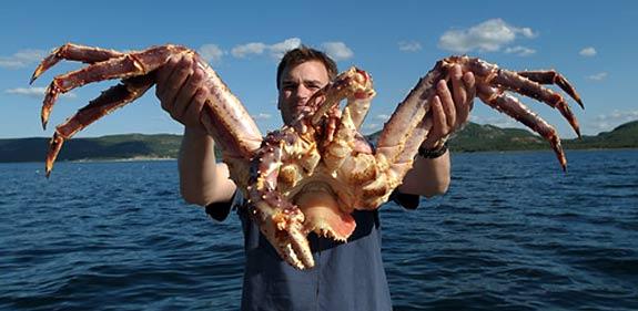 Wanted, ennemis à abattre, ou tofs des spécimens les plus moches Crabe_10