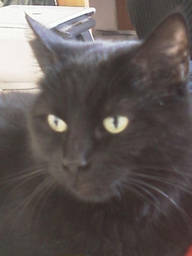 Mila, noire, 4 ans Imag0210