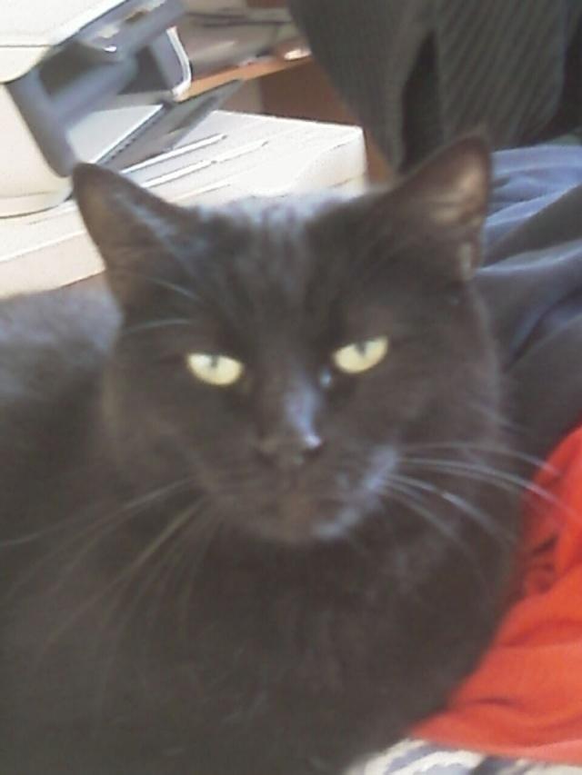 Mila, noire, 4 ans Imag0211
