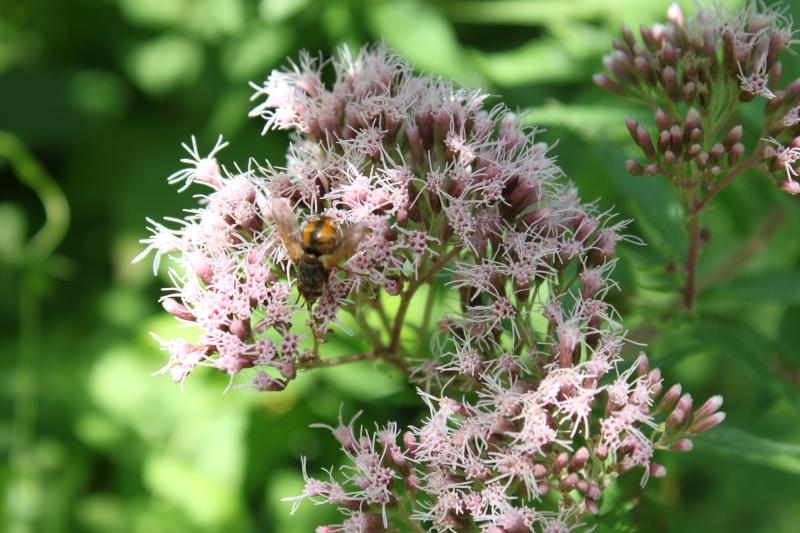 Le fil de l'entomologie - Page 5 Insect10