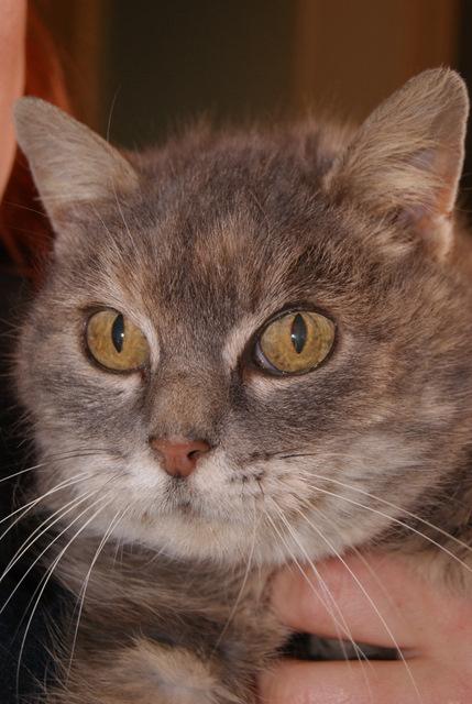 Sauvetage: Sansa, écaille diluée, femelle née en janvier 2002 Dsc04211