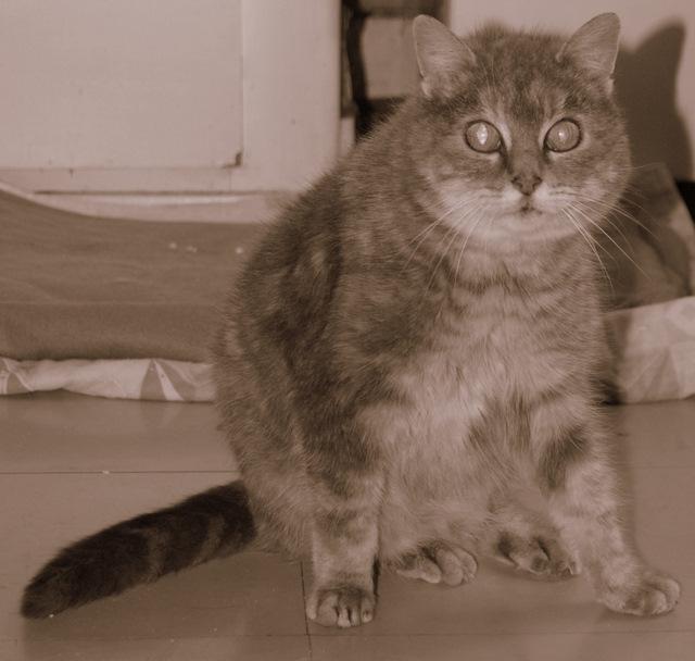 Sauvetage: Sansa, écaille diluée, femelle née en janvier 2002 Dsc04212