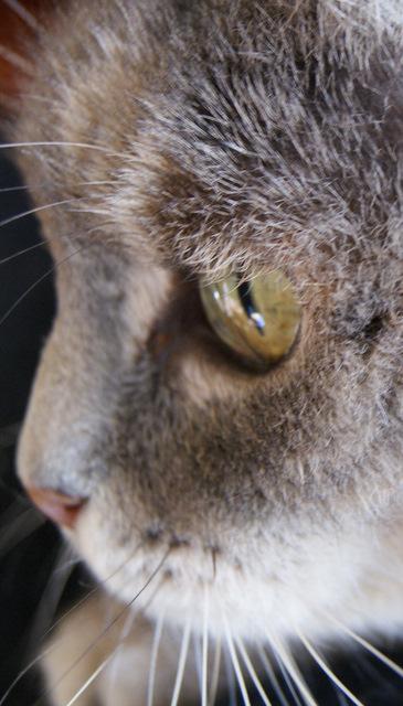 Sauvetage: Sansa, écaille diluée, femelle née en janvier 2002 Dsc04213