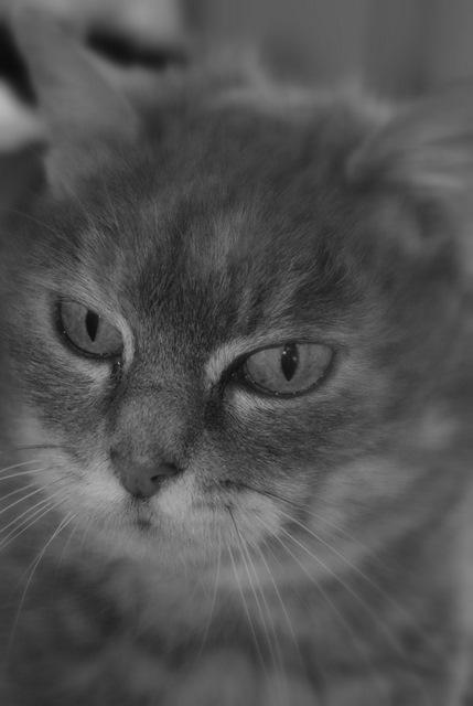 Sauvetage: Sansa, écaille diluée, femelle née en janvier 2002 Dsc04215