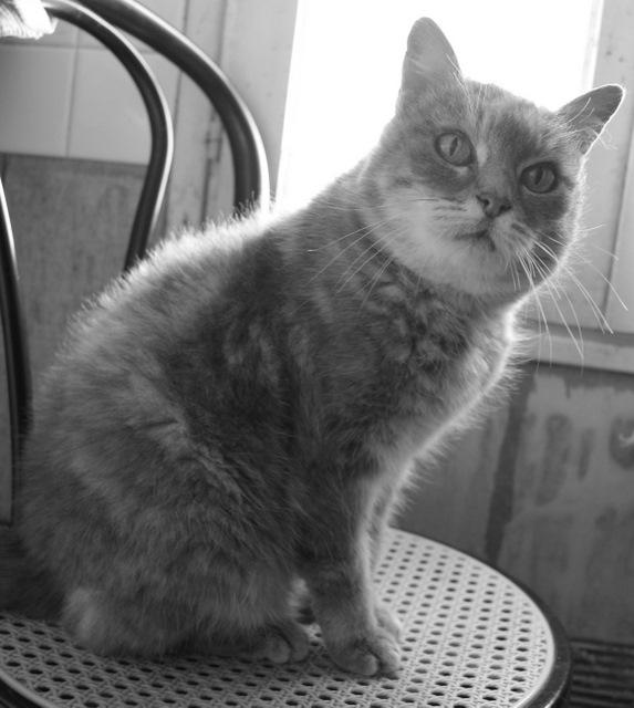 Sauvetage: Sansa, écaille diluée, femelle née en janvier 2002 Dsc04218