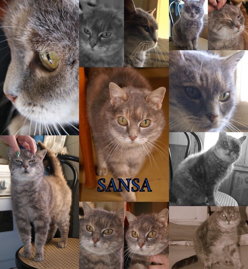 Sauvetage: Sansa, écaille diluée, femelle née en janvier 2002 Sansa11