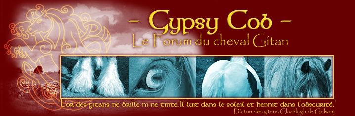Gypsy Cob