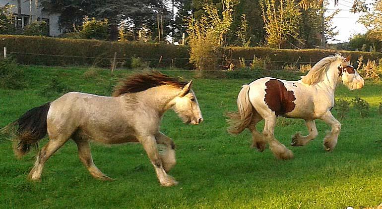 - Les mâles des Légendes Celtiques Riba__10