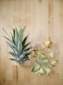 Bouture de tête Ananas comosus Ananas12