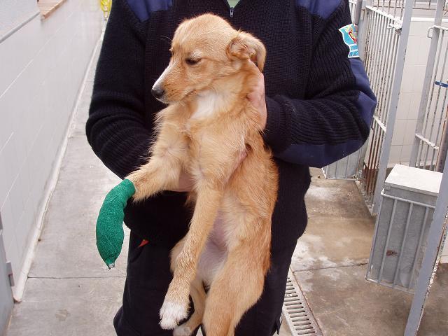 VIENA, cachorra mestiza, tamaño mediano, 7 meses,con patita herida.Madrid P1230010