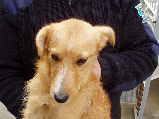 VIENA, cachorra mestiza, tamaño mediano, 7 meses,con patita herida.Madrid P1230011