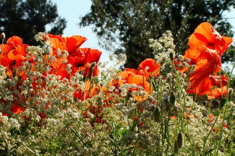 Début juin 2008 en Haute Provence - 3 10_jui14
