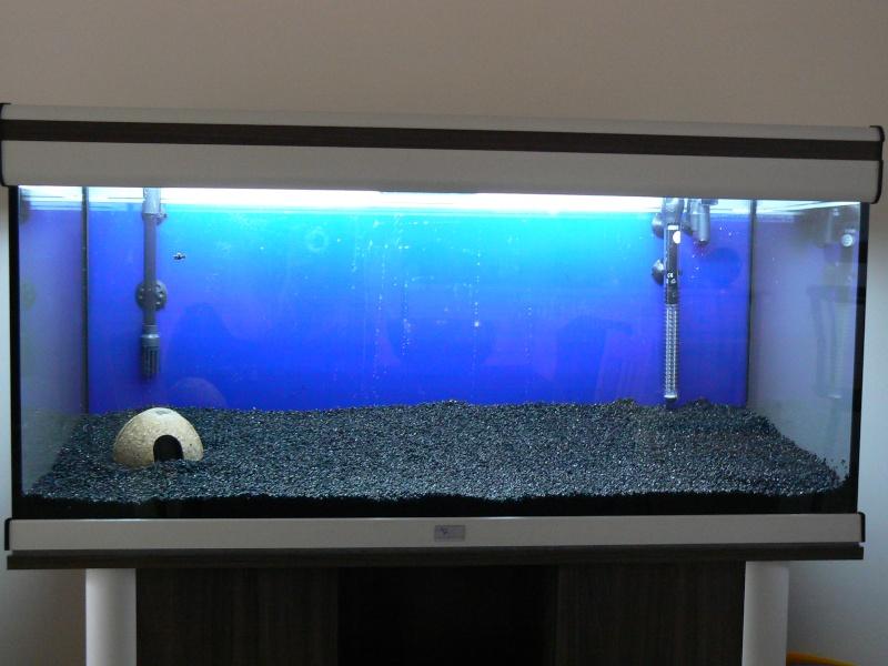 mon aquatlantis 180 litres P1030811