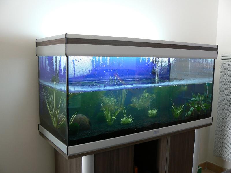 mon aquatlantis 180 litres P1030815