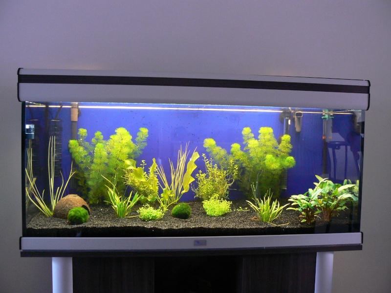 mon aquatlantis 180 litres P1030816