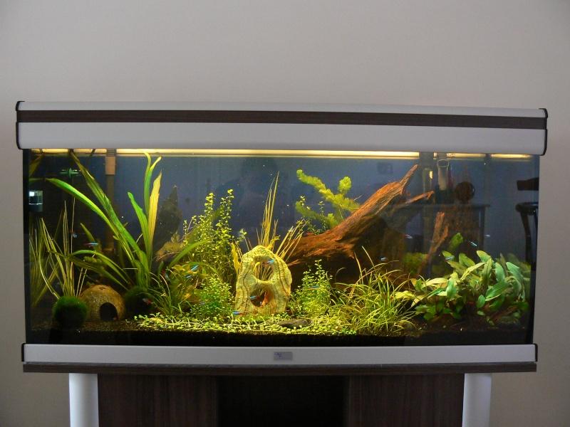 mon aquatlantis 180 litres - Page 2 P1040118