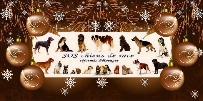 SOS chiens de race réformés d'élevages