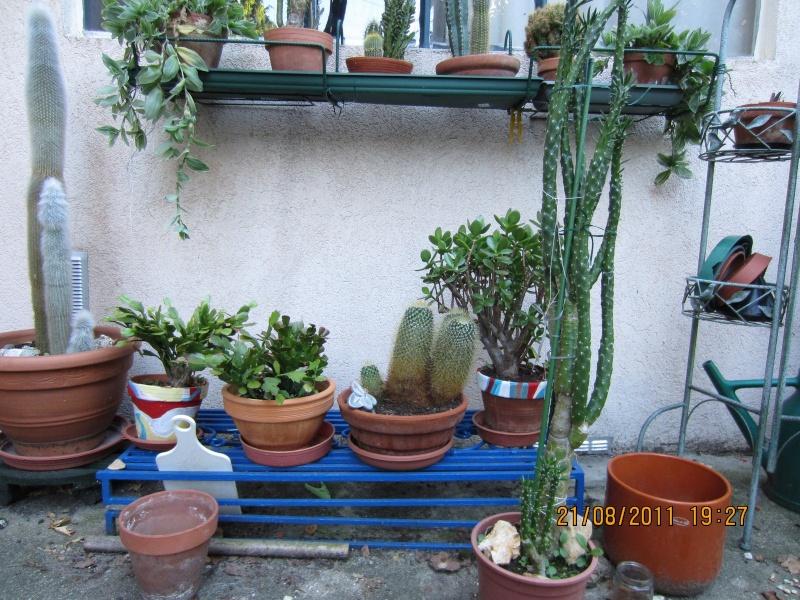 Les cactus sont de sortie  Img_0217