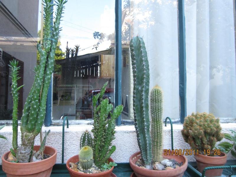Les cactus sont de sortie  Img_0218
