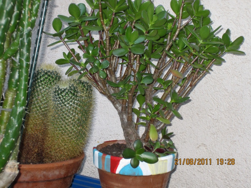 Les cactus sont de sortie  Img_0219