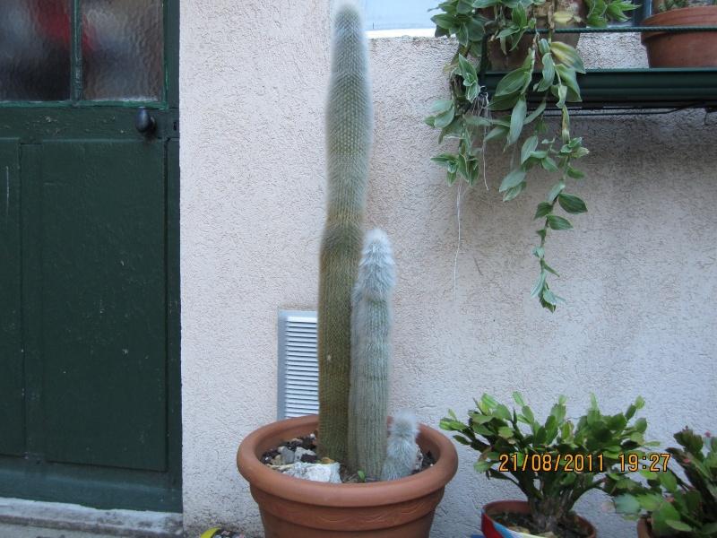 Les cactus sont de sortie  Img_0221