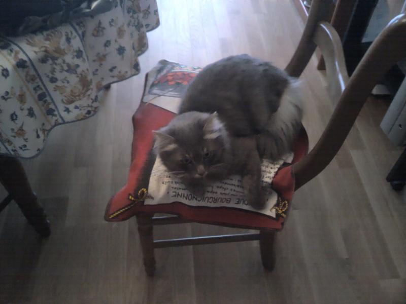présentation de mes chats - Page 3 2012-010