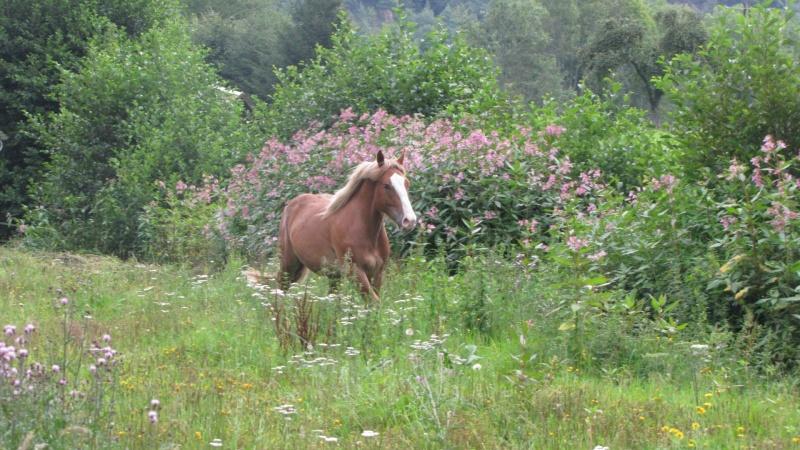 Concours Photos Aout : Des Chevaux et des Fleurs 06_08_31