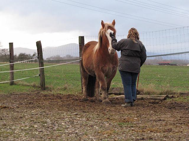 Thème juillet 2012 : Quand cheval rime avec poésie.... 07_01_31