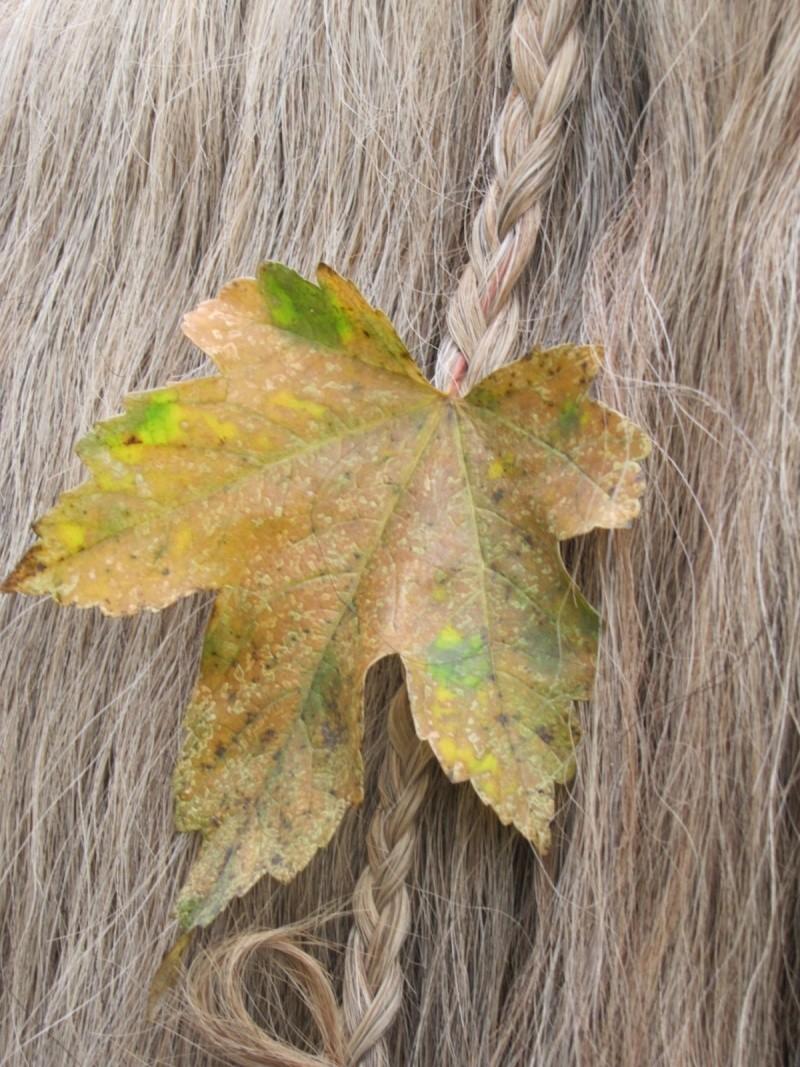 Concours Photo Octobre : Les Chevaux et les Couleurs de l'Automne 24_10_10
