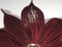 [Art] Livres objets-Livres d'artistes - Page 5 A2628