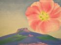 Georgia O'Keeffe [peintre] A3360