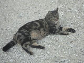 Moi Simba, un gros chat... Dsc00811