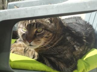 Moi Simba, un gros chat... Dsc00815