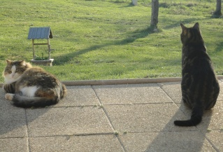 Moi Simba, un gros chat... Dsc00822