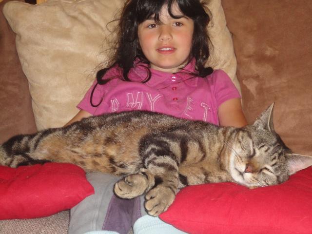 Moi Simba, un gros chat... Dsc00911