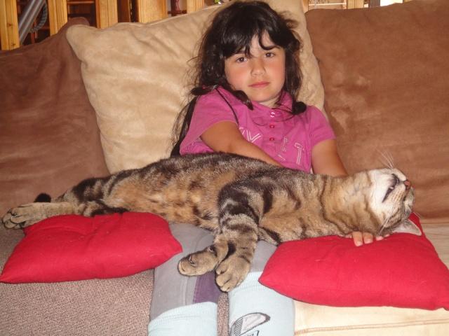 Moi Simba, un gros chat... Dsc00912