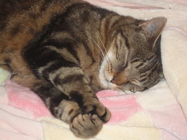 Moi Simba, un gros chat... Dsc00913