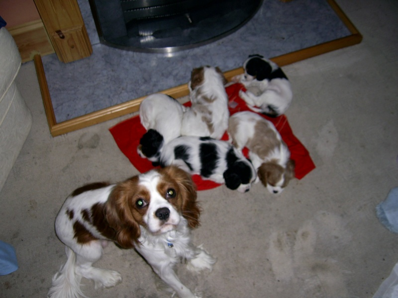 puppies Pic_0010