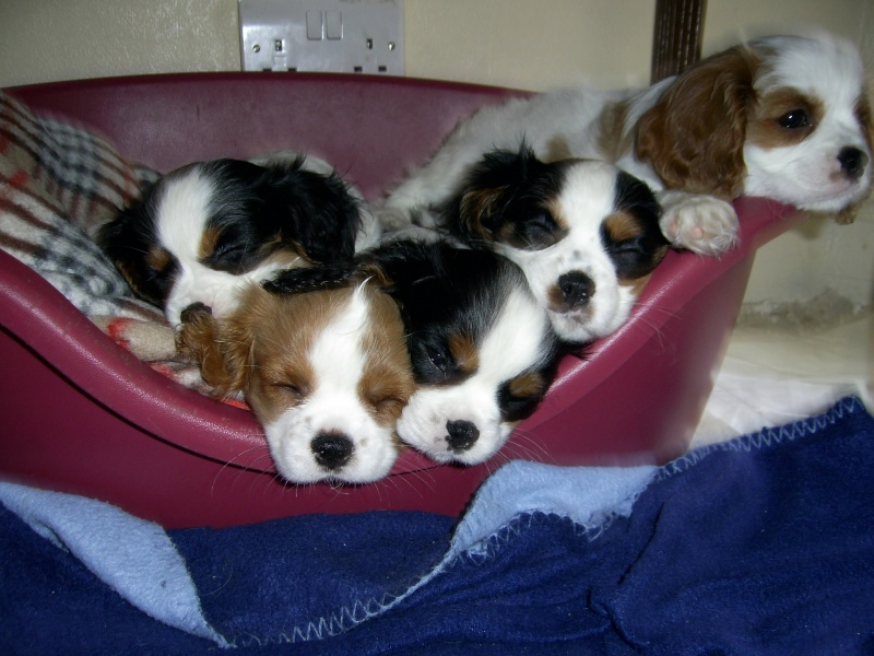 puppies Pic_0012