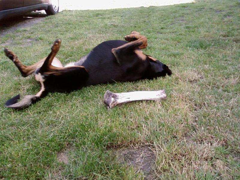 chien heureux sans jouets!! Sp_a0311