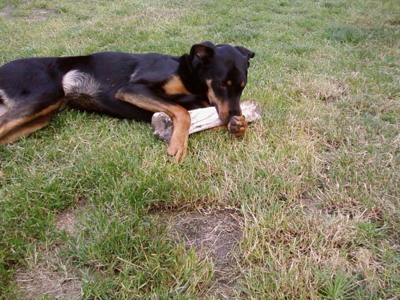 chien heureux sans jouets!! Sp_a0312