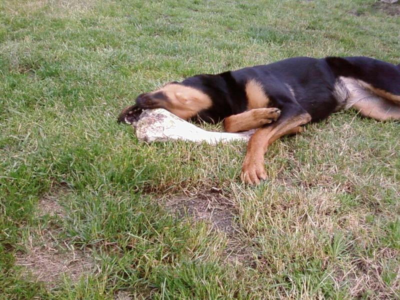 chien heureux sans jouets!! Sp_a0313