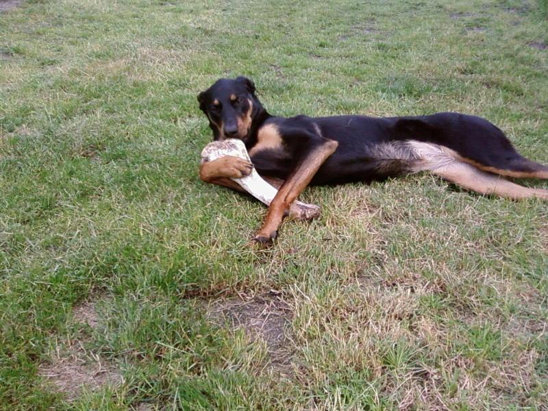 chien heureux sans jouets!! Sp_a0410