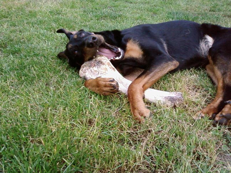 chien heureux sans jouets!! Sp_a0411