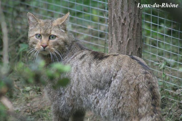 Photos du Parc des Félins par lynx-du-Rhone visite 2007 Img_5112