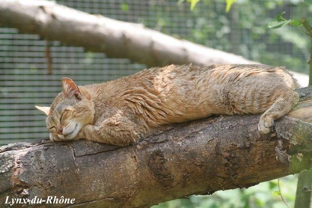 Photos du Parc des Félins par lynx-du-Rhone visite 2007 Img_5211