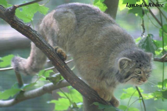 Photos du Parc des Félins par lynx-du-Rhone visite 2007 Img_5216