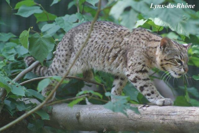 Photos du Parc des Félins par lynx-du-Rhone visite 2007 Img_5221